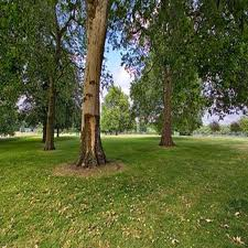 Green spaces cut stress levels in unemployed people