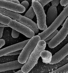 London may 20 harmless bacteria from people s noses could destroy