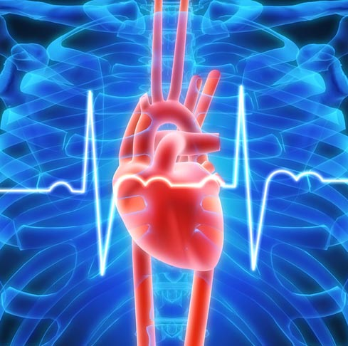 Researchers model erratic heartbeat in real time