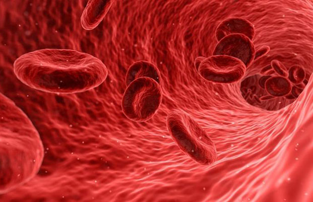 New find offers hope for some Hemophiliacs
