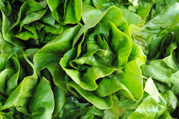 Common sanitisation practices for lettuce may not be sufficient