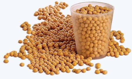 Soybean compounds enhances effects of cancer radiotherapy