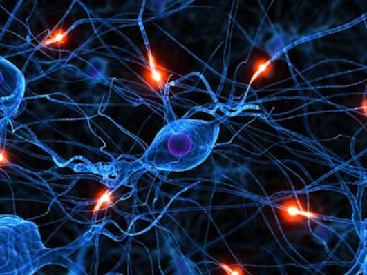 Stem cells can help identify neuronal defects, suggests Study