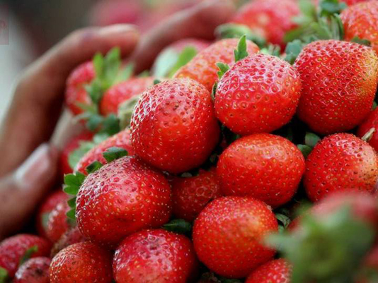 Daily intake of strawberries cuts breast cancer risk: Study