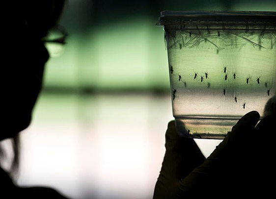 First Zika case confirmed in South Africa