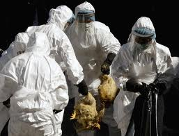 Deadly bird flu research paused amid bioterror fears