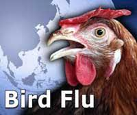Bird flu: Odisha begins culling poultry birds