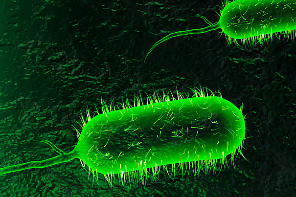 mystery microbe Bacteria, white blood cells, red blood cells, and protists all make an appearance in his short story, the microbe murder mystery, which was selected by our teachers as one of the best stories written that day.