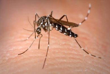100 dengue cases in Bengal's Siliguri