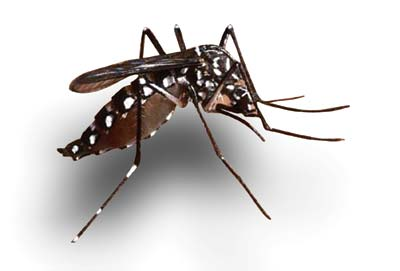 10 fresh dengue cases in Odisha