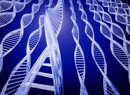 Mutations in 'metabolic' gene cause some people to stutter