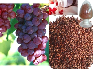 Grape seed extract kills prostate cancer cells