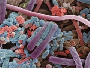 Why gut microbes are your `winter buddies