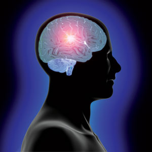 Part of brain that suppresses instinct identified