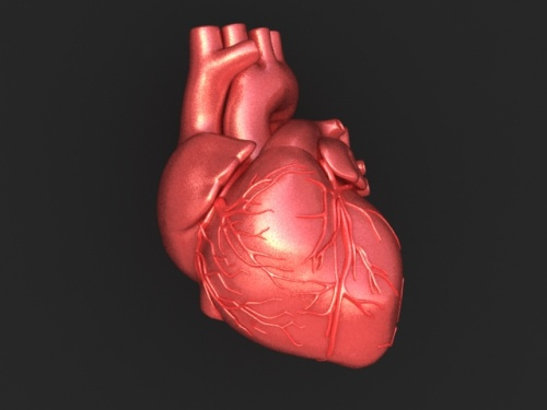 E. coli infection linked to heart disease risk London, Nov 19 : A new study ...