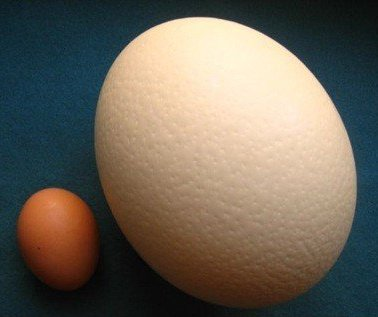24 times the size of hen's egg, one Ostrich egg is 'perfect for ...