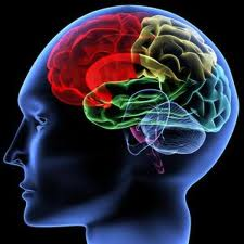 Lower enzyme levels linked with schizophrenia