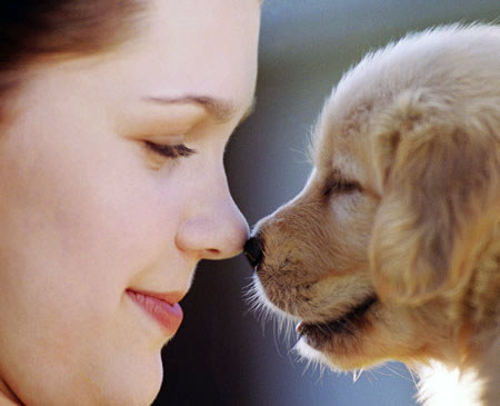 Pet love is similar to motherly love, say experts