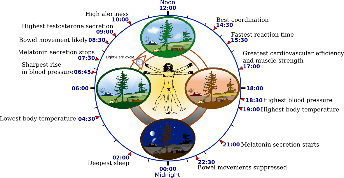 Biological Clock Ticking Biological Clock