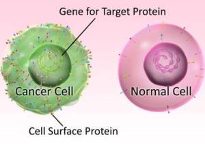 Proteins associated with immunity may cause cancer