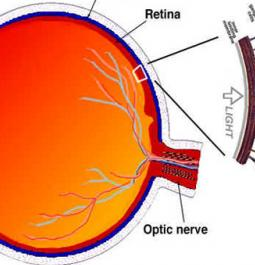 Retina cells may help in treating jet lag