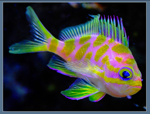 Aquariums Fish Unique Fish Sea Life Neon Fish Anthias Fish Fish Saltwater Fish Tanks