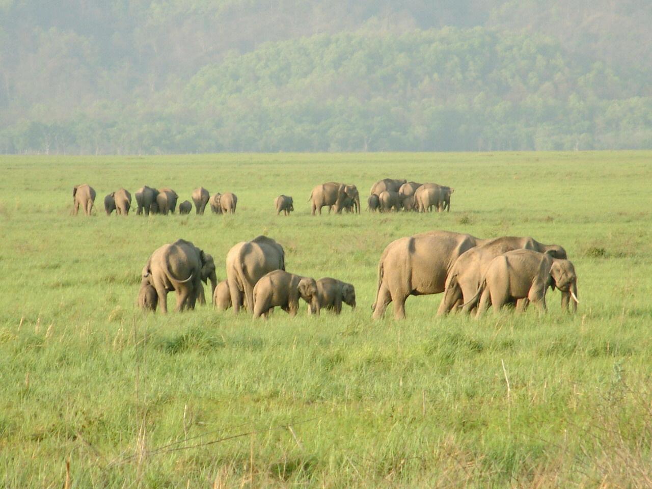 Dehradun, Aug 21 : Wildlife authorities of Jim Corbett National Park ...