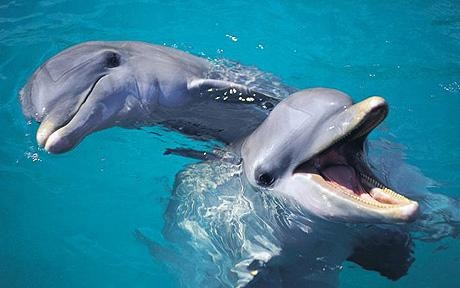 Successful dolphin mums get help from pals