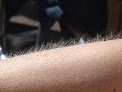 Goosebumps are `lie detector for emotions`