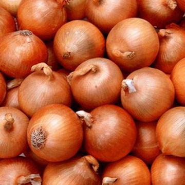 onion-exports