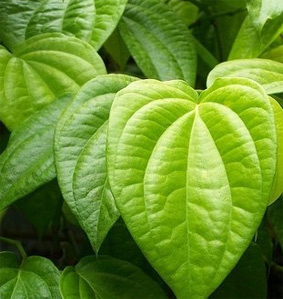 Image result for betel leaf