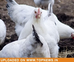 Bird-flu risk in six districts of Nepal