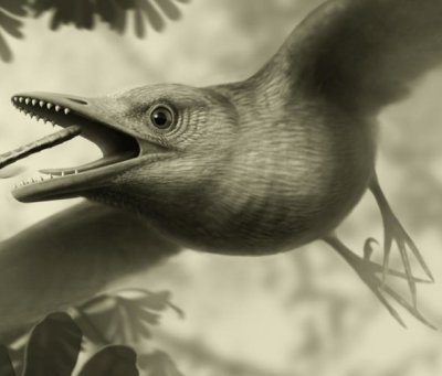 Could early birds fly? 125m-yr-old wing holds clue to ancient mystery
