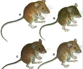 7 new species of mammals found in Philippines