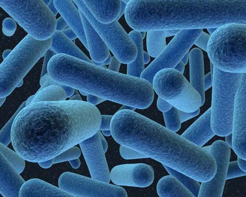 Beware! Kitchens may carry multi-drug resistant bacteria