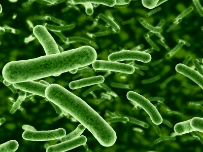 Deceptive protein helping bacteria dodge immune system found