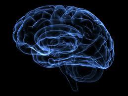 Brain protein that regulates body weight identified