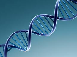 Blocking DNA repair enzyme could eventually lead to cancer therapy