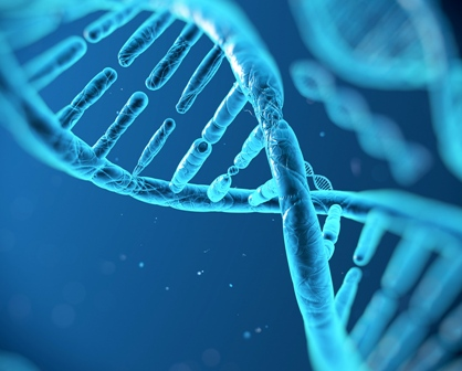 Merely 8.2 percent of DNA 'functional' in human beings