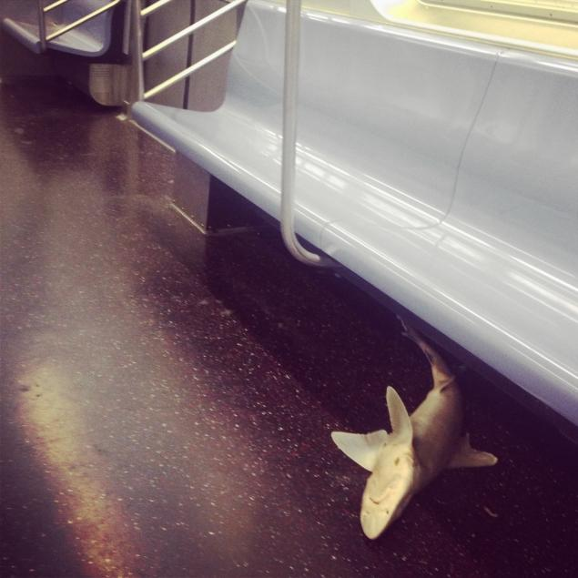 Dead shark found in New York subway car