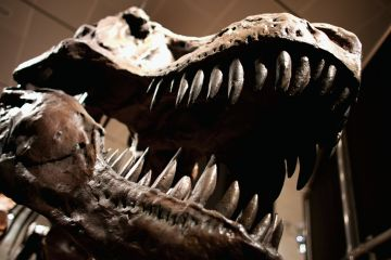 Dinosaurs may not have had fleas