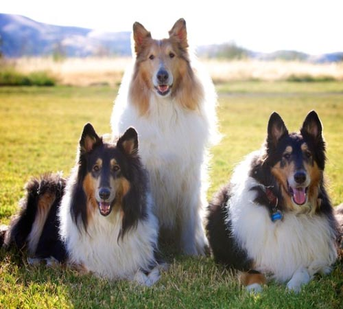 Dog breeds featured in movies more popular amongst people