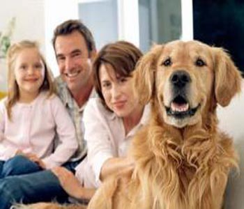 Family dog carries your body odour in brain!