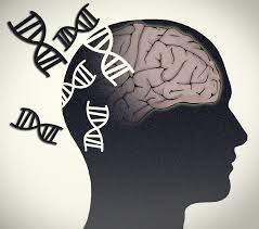 Gene linked to intellectual disability critical to brain development in humans