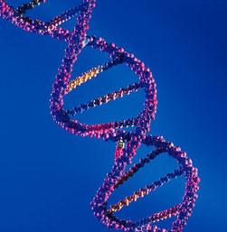 Genetic factors that help humans break down milk identified