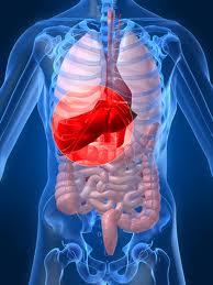 Hepatitis C virus hijacks liver microRNAs to survive