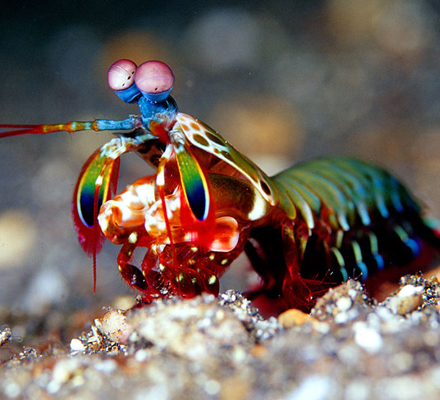 Now, mantis shrimp inspired materials that are tougher than airplanes