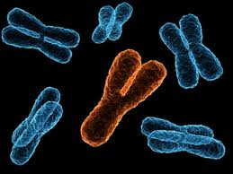 Y chromosome 'may play role in passing heart disease from father to son'