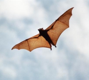 How bats track their targets in cluttered scenes revealed