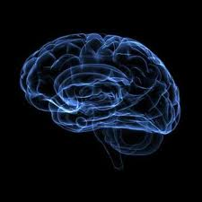 How appetite cells in brain respond to fasting